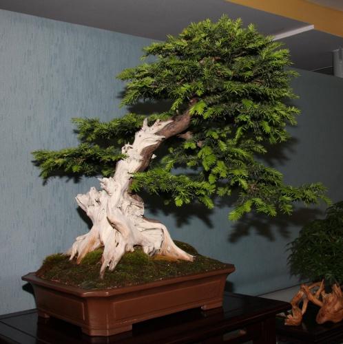 Bonsai 893 - bonsaipaterna