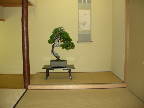 Bonsai Japon 2007 - huang-hito
