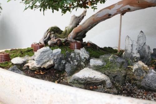 Bonsai 1257 - Fran Rives