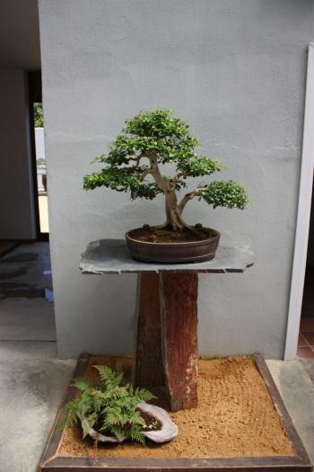 Bonsai Museo del Bonsai Alcobendas - Fran Rives