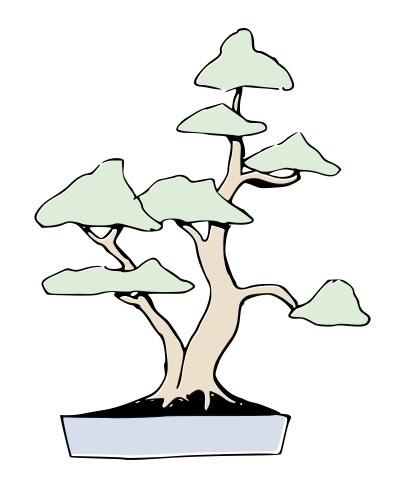 Bonsai SOKAN - Doble tronco - Ilustraciones