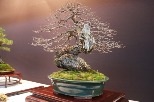 Bonsai Quercus Robur - Roble - EBA Lorca