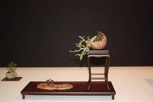 Bonsai Sohin Composición - Reg Bolton - EBA Lorca