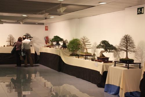 Bonsai Sala Exposiciones 4 - CBALICANTE