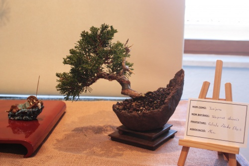 Bonsai Junipero - Assoc. Bonsai Muro