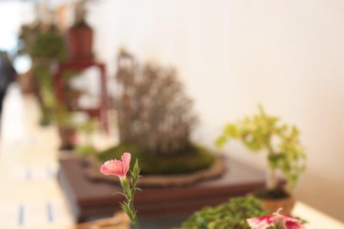 Bonsai X Jornadas Mediterraneas de Bonsai en Torrevieja y XVII Congreso de Bonsái de la Comunidad Valenciana2012 - torrevejense