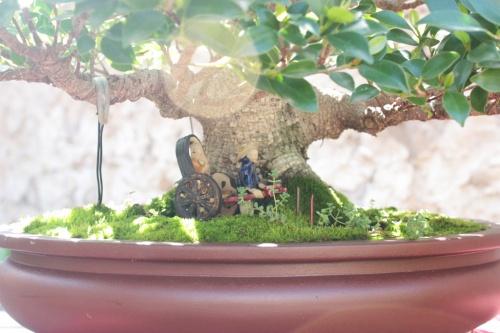 Bonsai Parte baja del Ficus - Bonsai Oriol