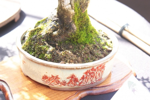 Bonsai Maceta Granado - Bonsai Oriol