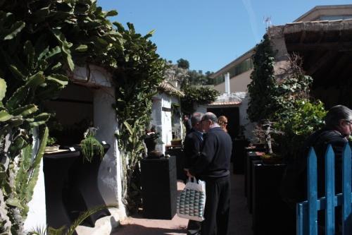 Bonsai Casa de Miguel Hernandez - Bonsai Oriol