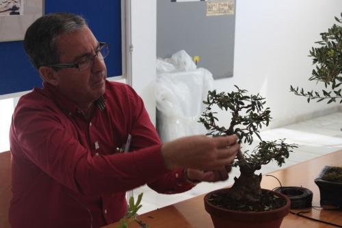 Bonsai Jose Gomez del Rio en Orihuela dando una charla sobre Higueras - Bonsai Oriol