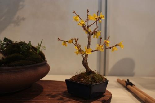 Bonsai 10721 - CBALICANTE