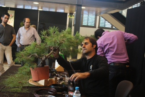 Bonsai Jose Acuña Cruz trabajando un Pino en Orihuela - Bonsai Oriol