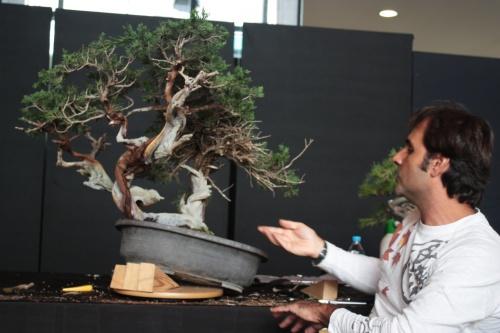 Bonsai Clase magistral de Jose Acuña - Bonsai Oriol