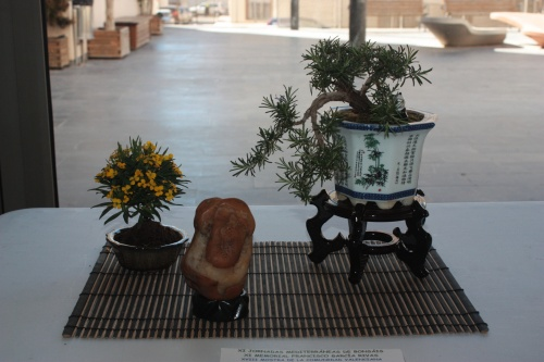 Bonsai Rusmarinus Oficinalis - Romero de Asociación Mediterranea del Bonsai - torrevejense