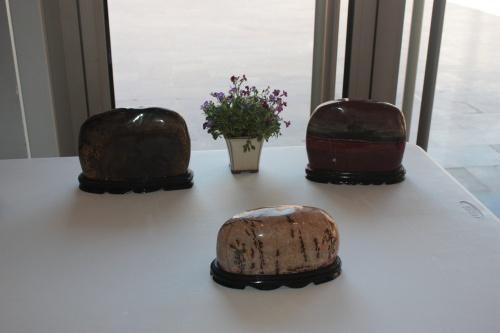 Bonsai Mesa de Bisekis - torrevejense