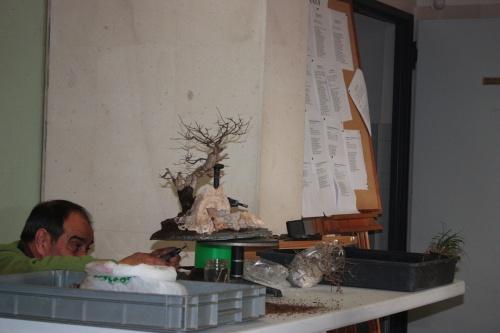 Bonsai Demostración sobre como hacer paisajes naturales - torrevejense