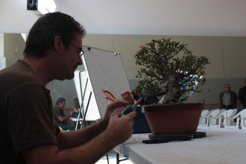 Bonsai Samuel trabando con una Azalea - torrevejense
