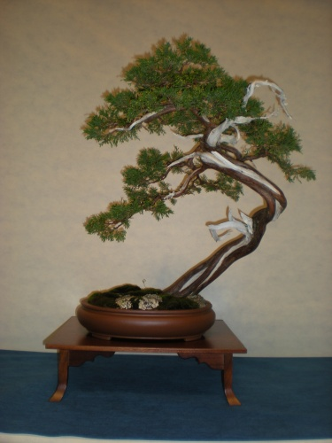 Bonsai 12229 - SAKKA KYOOKAI