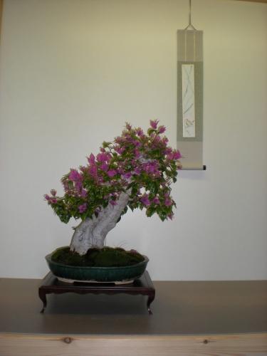 Bonsai 12237 - SAKKA KYOOKAI