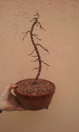 Ficus de esqueje 2010