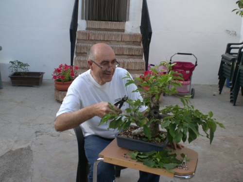 Bonsai 13101 - vicente solbes