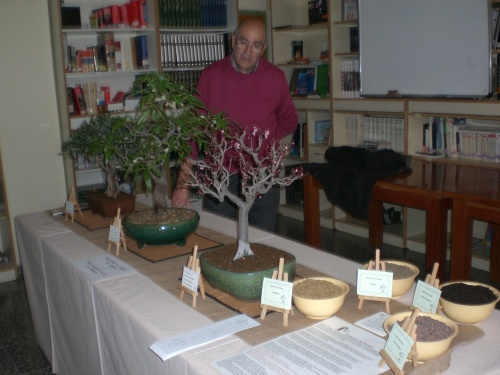 Bonsai 13277 - vicente solbes