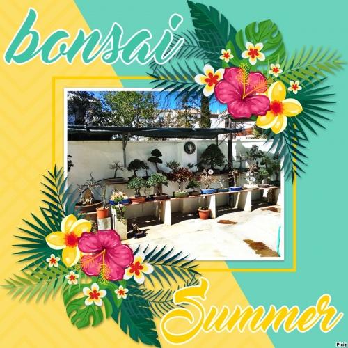 Bonsai 13897 - vicente solbes