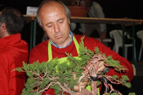 Bonsai Sebastian Fernandez, Demostracion Bonsai Lorca 2009 - EBA Lorca