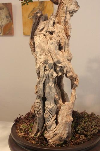 Bonsai Espectacular Granado Comun - torrevejense