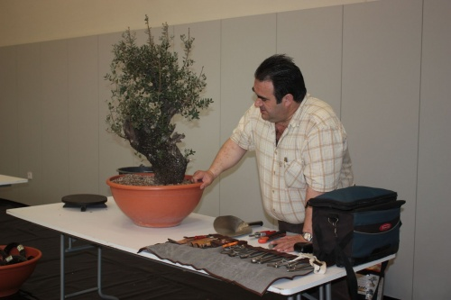 Bonsai Comienza la Demo, preparacin de la mesa de trabajo - torrevejense
