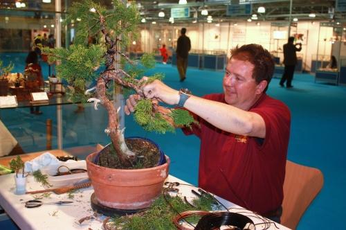 Bonsai Juan Ortega haciendo una demostración de formación de Bonsai - CBALICANTE