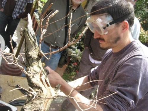 Bonsai trabajo en olmo-DEMO EN SANTIAGO DE CHILE - Andres Bicocca