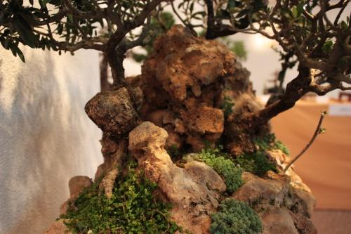 Bonsai La roca utilizada es preciosa - Assoc. Bonsai Muro