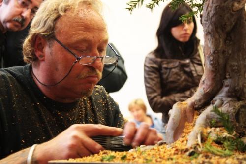 Bonsai Kevin Wilson Concentrado en su trabajo - Jornadas Mediterraneas de Bonsai - torrevejense