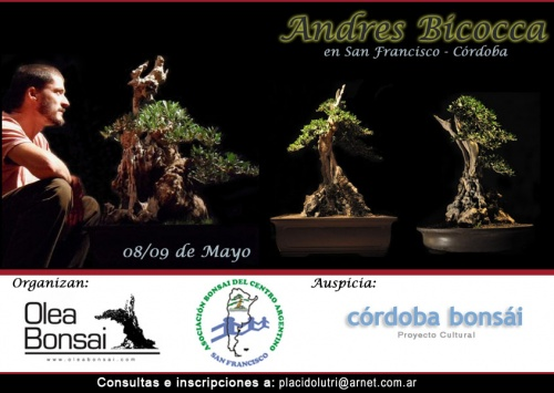 Bonsai Taller Andres Bicocca - San Francisco - Cordoba - Andres Bicocca