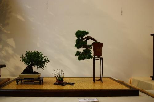 Bonsai Composicion Ginebre xines i roses - CBALICANTE