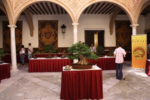 Bonsai Bonsai en el centro del patio del Palacio de Guevara - Amigos del Bonsai Lorca