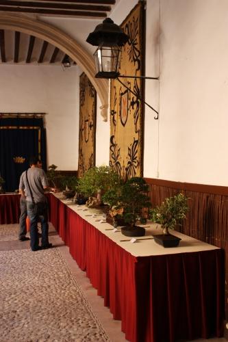 Bonsai Mesa de Bonsais en el Palacio de Guevara - Amigos del Bonsai Lorca