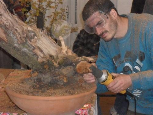 Bonsai 5949 - Andres Bicocca