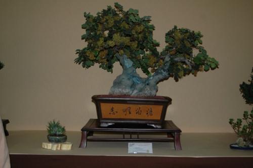 Bonsai 7065 - aebonsai