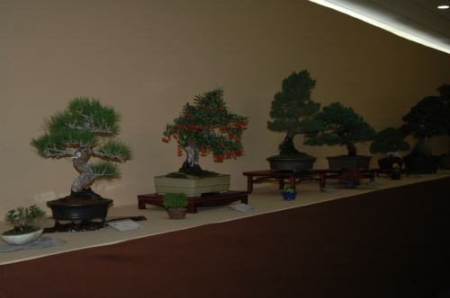 Bonsai 7221 - aebonsai