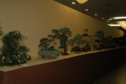 Bonsai 7225 - aebonsai
