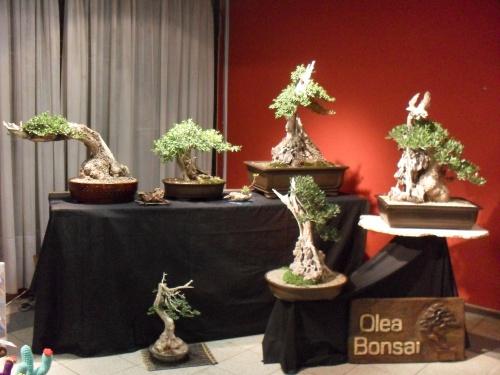 Bonsai 7417 - Andres Bicocca