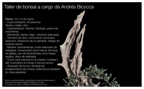 Bonsai 7545 - Andres Bicocca