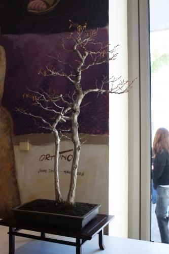 Bonsai Carpinus de Jaume Canals - torrevejense