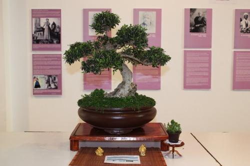 Bonsai Acebucho o Olea Silvestris de Justo Lorenzo Rodriguez - torrevejense