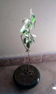 almendro 06/04/2011