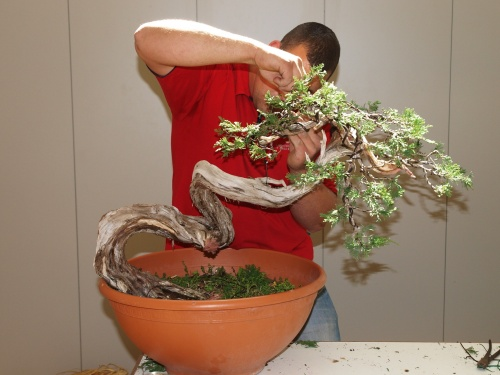 Demotracion de Bonsai - Antonio Zamora