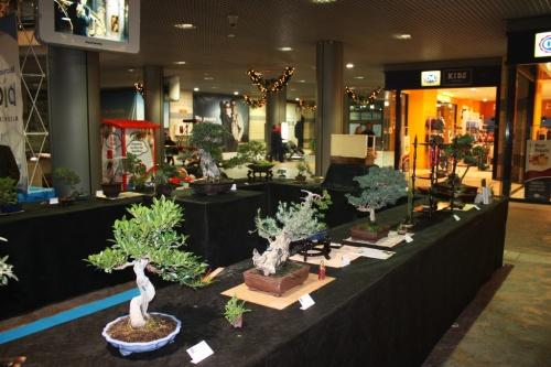 Bonsai Mesa de exposición del Club Bonsai Oriol - Bonsai Oriol