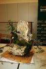Como hacer bonsai sobre roca - Jaume Canals